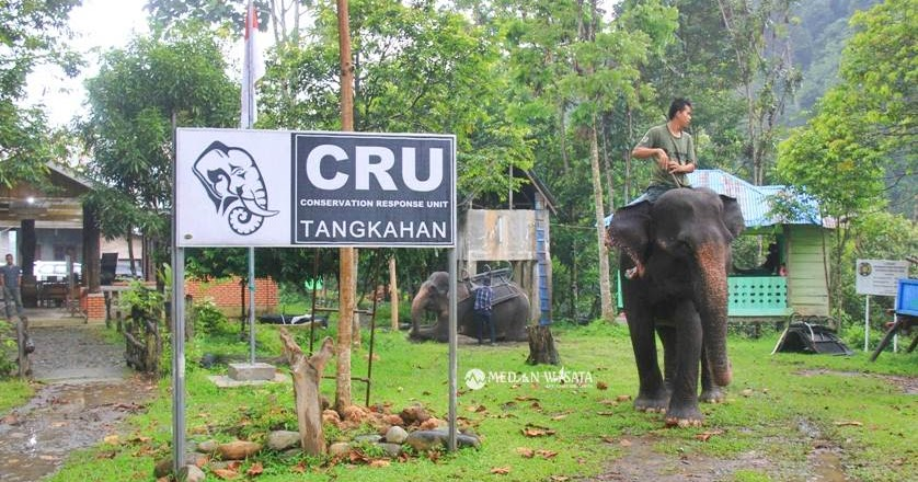 Wisata Tangkahan Sumatera Utara